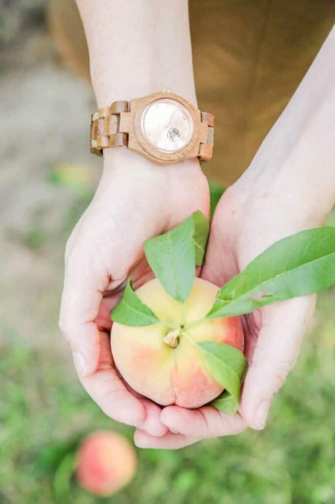 peach at eckertt's farm